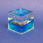 Paperweight Cube Shark